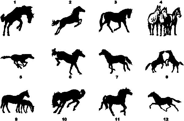 Pony horse horses foal decal decals sticker stickers 1